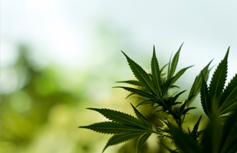 cannabis business consulting and legal services « michigan