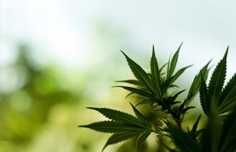 Marijuana Licensing APplications