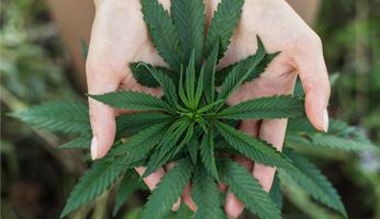 Michigan Marijuana Application Appeal