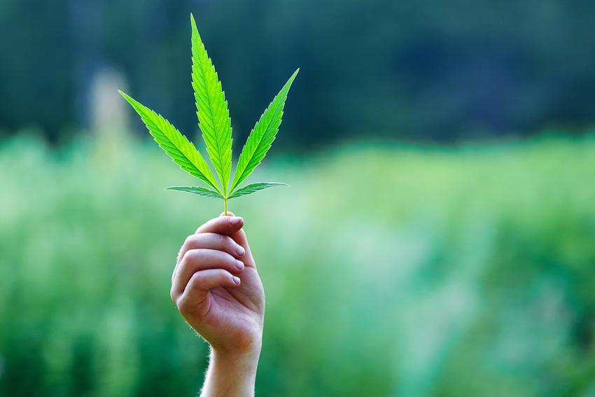 Federal Legislation to End Marijuana Prohibition