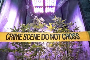 Michigan marijuana conviction expungement