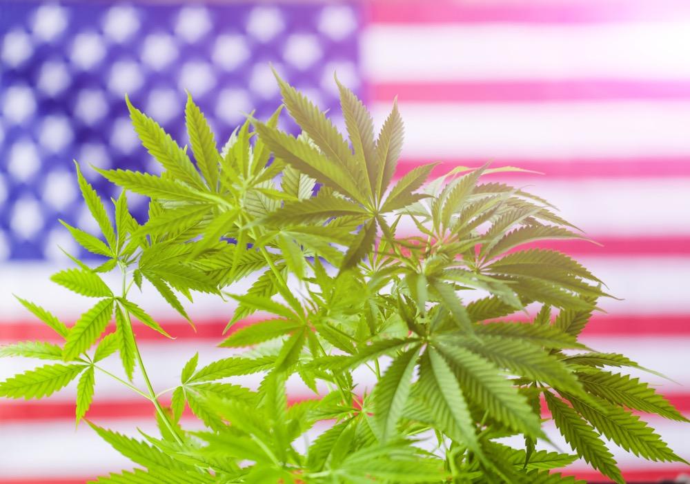 Cannabis July 4th Michigan