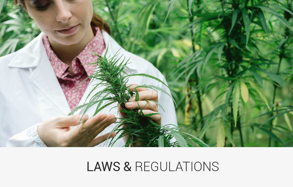 Michigan Marijuana Rules and Regulations