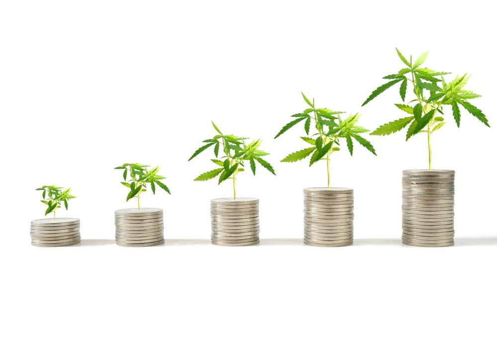 marijuana facility applications