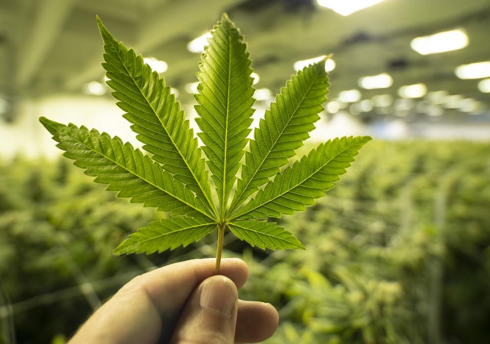 Adult-Use Marijuana Establishment License