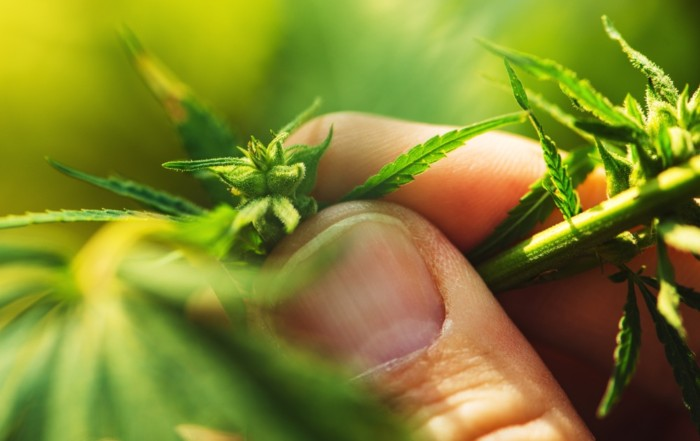 How to Get In the Legal Cannabis Industry Without Being a Supplemental Applicant