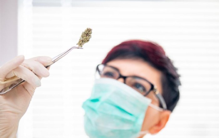 Adult woman with protective glove and face mask holding cannabis bud with tweezers, GETTY